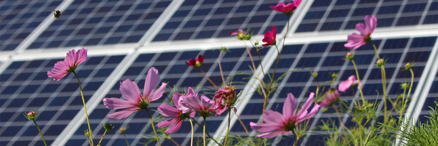 Want to save bees? Join Solential in planting wildflower habitats under solar arrays