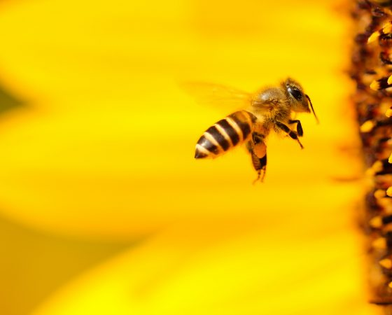 Five Reasons to Consider Installing a Pollinator Habitat Under Your Solar Array